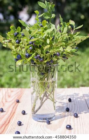 Bush blueberries in the glass. Summer still life - stock photo