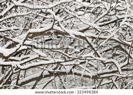 Bush covered with thick snow, close-up - stock photo