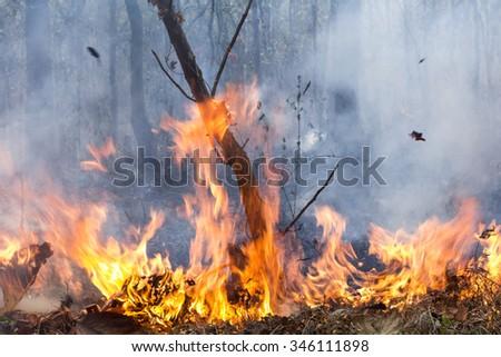 bush fire destroy tropical forest - stock photo
