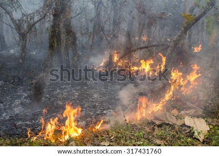 bush fire in tropical forest - stock photo