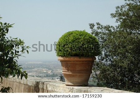 Bush in brown pot, Tivoli, Italy - stock photo