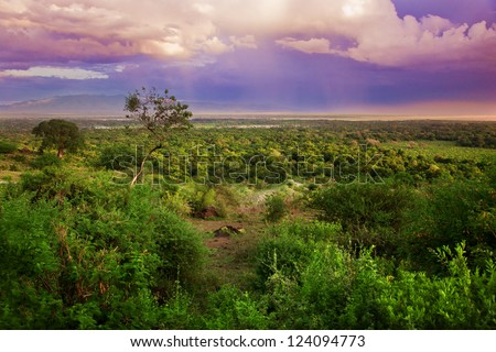 Bush in Tanzania, Africa. Sunset landscape