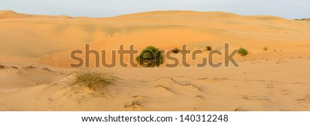 Bush in the Sahara desert