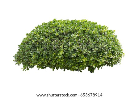 Bush isolated on white background
