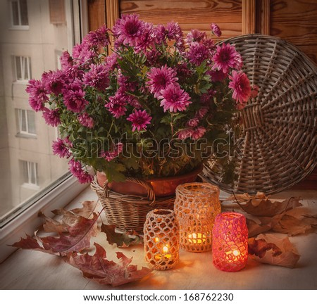 Bush of purple chrysanthemum in a basket and oak leaves next to the flashlights on a balcony - stock photo