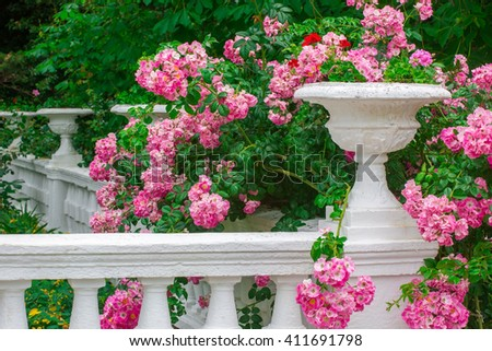 Bush of the blossoming pink roses against a white stone vase