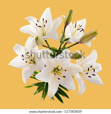 Bush of white lilies. Isolation.