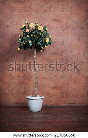 bush of yellow roses in a vase on a background vintage wall - stock photo