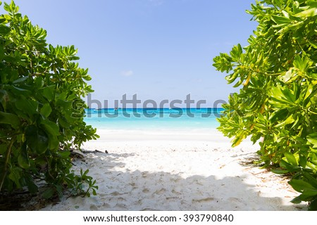 Bush, sand and sea Shrubs near the sea Daytime at clear and hot. - stock photo