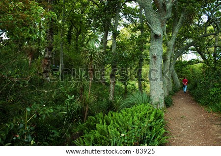 Bush Track in Auckland, New Zealand - stock photo