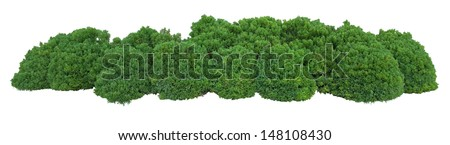 Bush trimmed into round shape - stock photo