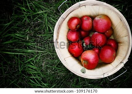 Bushel of Apples - stock photo