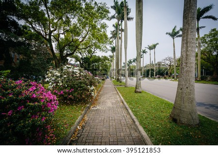 Bushes and palm trees along a walkway at National Taiwan University, in Taipei, Taiwan.