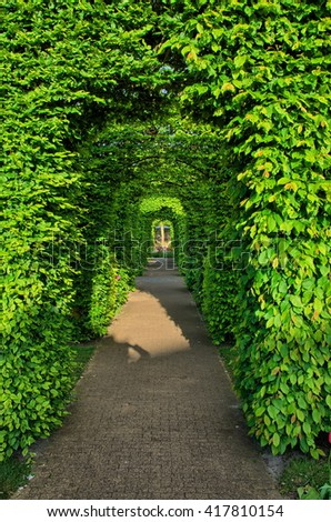 Bushes green alley in Keukenhof Park, Lisse in Holland. - stock photo