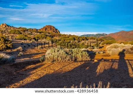 Bushes in red mountain desert in Tenerife, Canary Islands. - stock photo