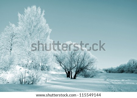 bushes in snow on coast river - stock photo