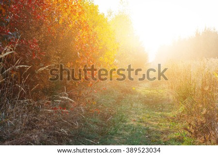 Bushes in sunset - stock photo