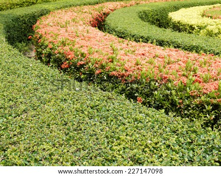 Bushes in the park - stock photo