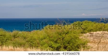 Bushes near Hapuna beach, Big Island, Hawaii - stock photo