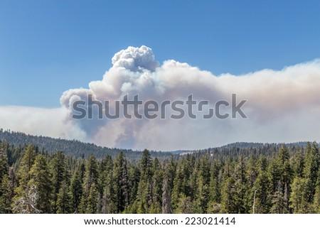Bushfire - stock photo