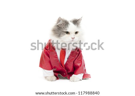 business cat isolated on white background