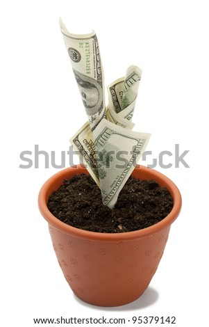 Business concept image: money growth in flowerpot. Object on white background