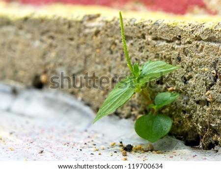 Business concept of break through brick - stock photo