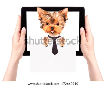 business dog holding empty banner on a digital tablet screen isolated on white