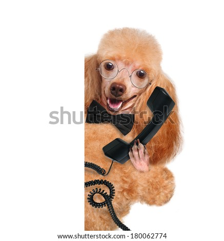 business dog on the phone  the white banners - stock photo