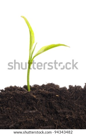 business growth concept with ypoung plant and soil on white background