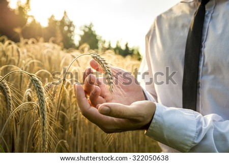 Business man cupping a ripe ear of wheat in a conceptual image for business inspiration vision or success. - stock photo