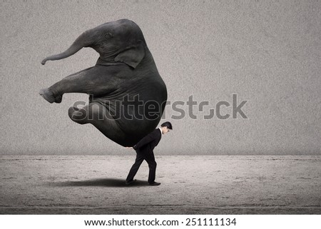 Business manager with suit lifting elephant on grey background
