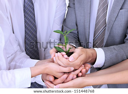 Business team holding together fresh green sprout  - stock photo