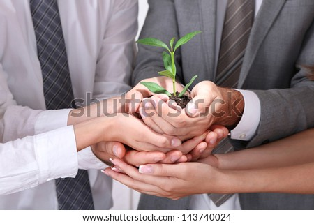 Business team holding together fresh green sprout closeup - stock photo