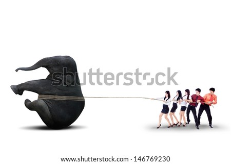 Business team people is pulling an elephant together isolated over white background - stock photo