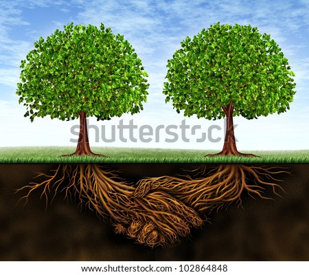 Business teamwork growth as a symbol of financial cooperation and deal making between two partners as trees and underground plant roots in the shape of shaking hands resulting in growing success. - stock photo