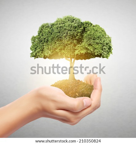 Businessman holding tree sprouting from a handful of coins - stock photo