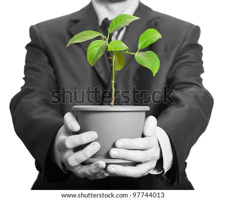 Businessman is holding a plant in pot. Isolated on white