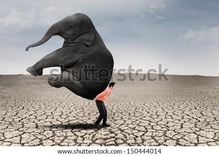 Businessman lifting big elephant on dry ground - leadership concept - stock photo