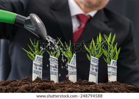 Businessman Watering Plants Covered With American Dollar - stock photo