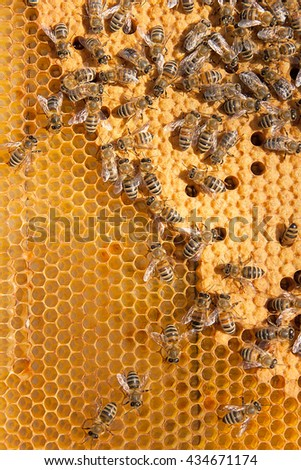 Busy bees inside hive with open and sealed cells for their young. Birth of o a young bees. Close up showing some animals and honeycomb structure. - stock photo