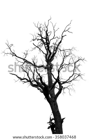 But a dead tree limb (B&W) - stock photo
