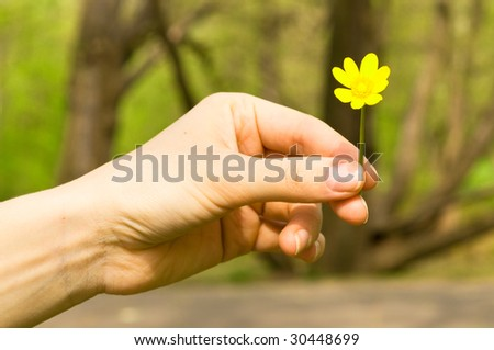 Buttercup in a hand against wood