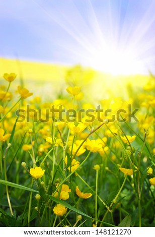 Buttercups yellow flowers on the green meadow with sun rays - stock photo