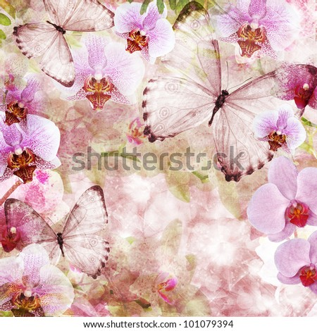 Butterflies and orchids flowers pink background ( 1 of set) - stock photo