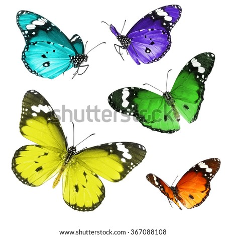 Butterflies flight isolated on a white background - stock photo