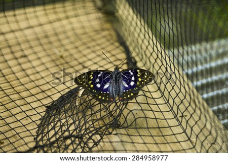 Butterflies in the cage