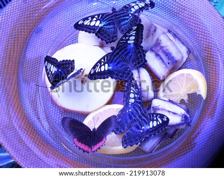 butterflies in the dish and fruit - stock photo