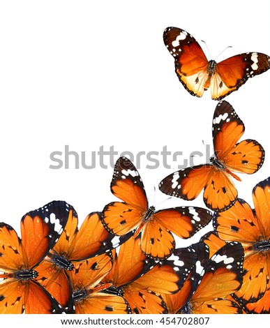 Butterflies isolated on white. Wildlife composition with copy space
