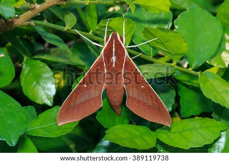 Butterflies, moths, insects, nature. - stock photo
